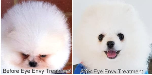 Pictured Above: Pomeranian tear stains. Before and after using the recommended tear stain remover product.
