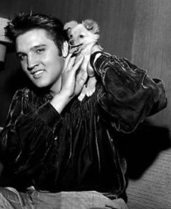 Elvis Presley bought a Pom called Sweet Pea