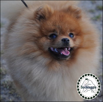 Choose The Right Water And Food Bowls For Pomeranians